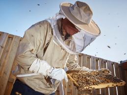 Bestuiving bijen in de rode bessen: cruciaal voor een goede oogst